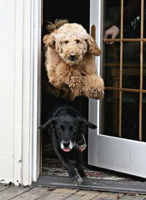 dogs-out-the-door 1.jpg