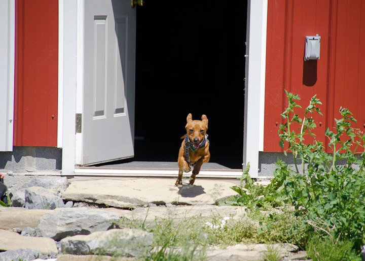 dogs-out-the-door 2.jpg